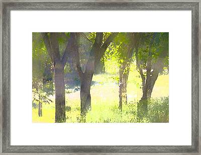 Oaks 25 Framed Print by Pamela Cooper