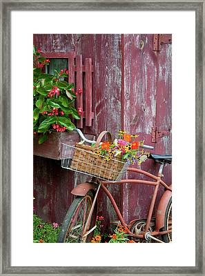 Old Bicycle With Flower Basket Next Framed Print