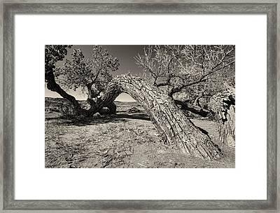 Old Timer Framed Print by Stellina Giannitsi
