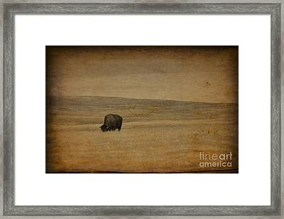Western Themed South Dakota Bison  Framed Print