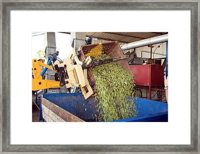 Olive Oil Press Framed Print