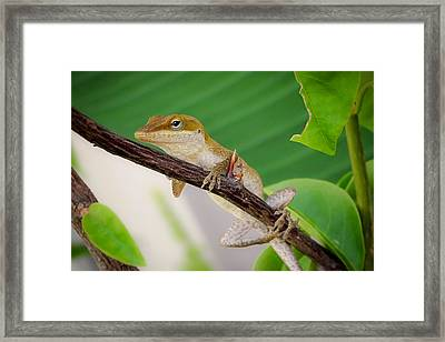 On Guard Framed Print by TK Goforth