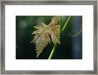On My Own Framed Print by Fraida Gutovich