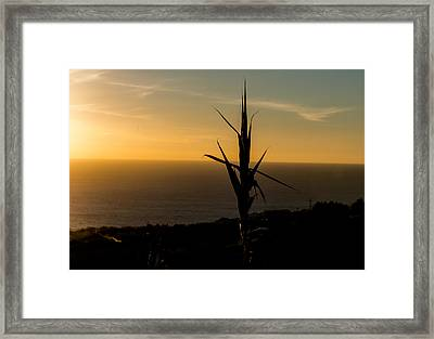 One At Sunset Framed Print