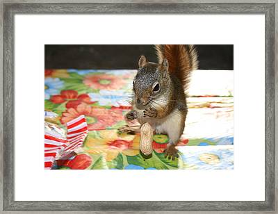 Oops Framed Print by Paula Brown