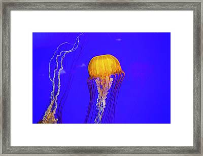Or, Newport, Oregon Coast Aquarium Framed Print by Jamie and Judy Wild
