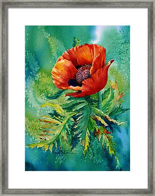 Orange Oriental Poppy Framed Print by Karen Mattson