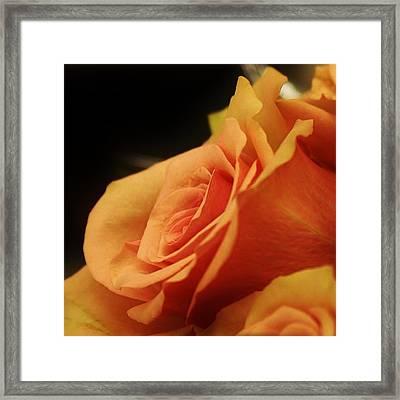 Orange Supreme Framed Print by Bruce Bley