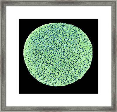 Orbulina Framed Print