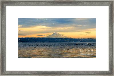 Orca Family And Mt. Rainier Framed Print