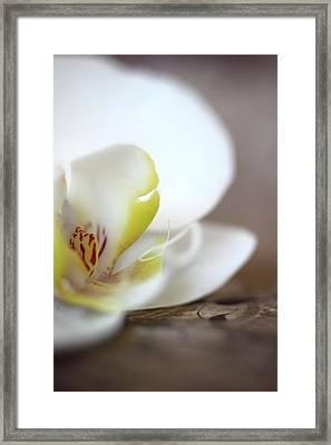 Orchid Framed Print by AR Annahita