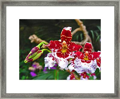 Orchid. Canary Islands. Framed Print by Andy Za