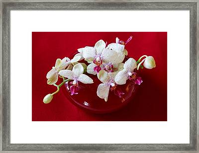 Framed Print featuring the photograph Orchid Center Piece by Paul Indigo
