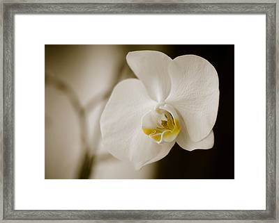 Orchid Framed Print by Ivelin Donchev