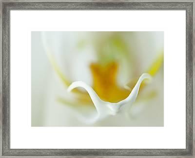 Moth Orchid Macro Framed Print