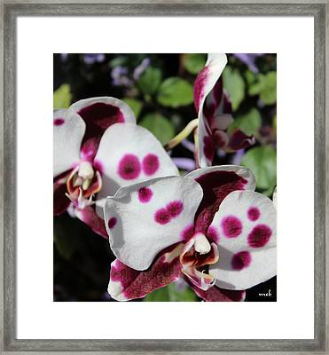 Orchid One Framed Print by Mark Steven Burhart