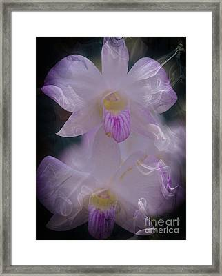 Orchid Ruffles Framed Print by Kathleen Struckle