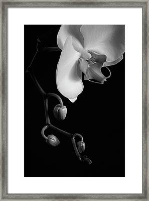 Orchid  Waterloo, Quebec, Canada Framed Print