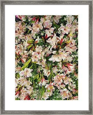 Orchids For Sale In Main Street Market Framed Print by Panoramic Images