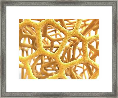 Osteoporotic Bone Framed Print by Alfred Pasieka
