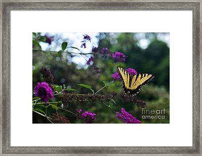 Out Of Bounds II Framed Print by Judy Wolinsky