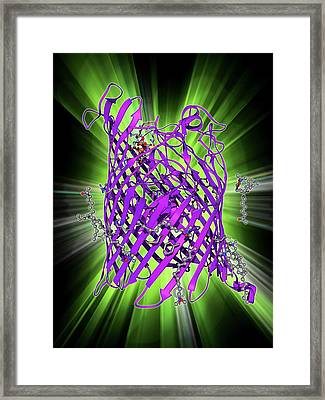 Outer Membrane Receptor Protein Molecule Framed Print by Laguna Design