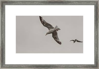 Framed Print featuring the photograph Owners Of The Scottish Sky by Sergey Simanovsky
