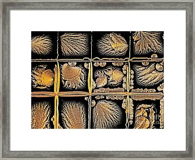 Oxidized Vitamin C Framed Print