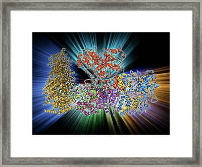 Oxidoreductase Enzyme Complex Framed Print by Laguna Design