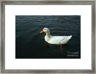 Paddling In Lake Kittamaqundi Framed Print by Emmy Marie Vickers