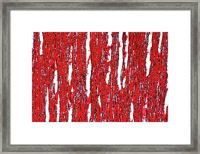 Palaquium Obovatum Stem Framed Print