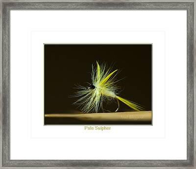 Pale Sulpher Framed Print by Neal Blizzard