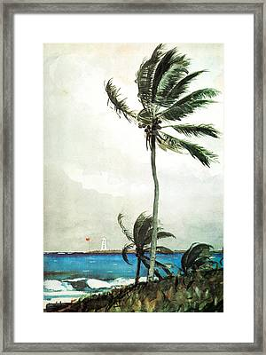 Palm Tree Nassau Framed Print by Celestial Images