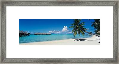 Palm Tree On The Beach, Moana Beach Framed Print