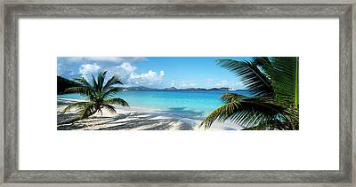 Palm Trees On The Beach, Us Virgin Framed Print by Panoramic Images