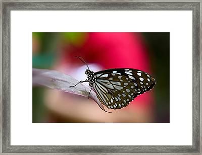 Paper Kite Butterfly  Framed Print by Saija  Lehtonen