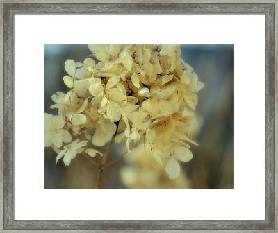 Winter Paper Wings  Framed Print by JAMART Photography