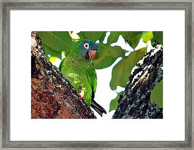 Parakeet In The Park Framed Print by Ira Runyan