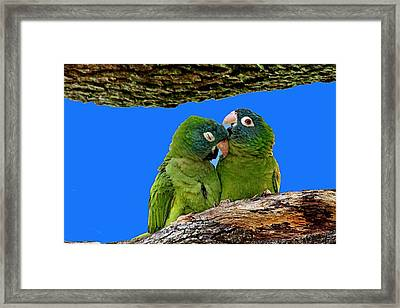 Parakeet Pair Framed Print