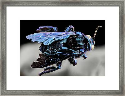 Parasitic Bee Framed Print by Us Geological Survey
