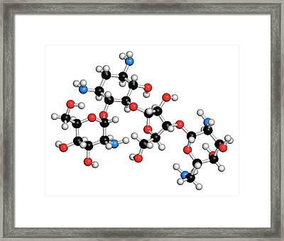 Paromomycin Aminoglycoside Antibiotic Framed Print