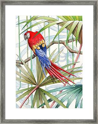 Parrot, 2008 Framed Print by Jenny Barnard