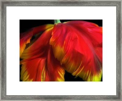 Parrot Petals Framed Print by Jessica Jenney