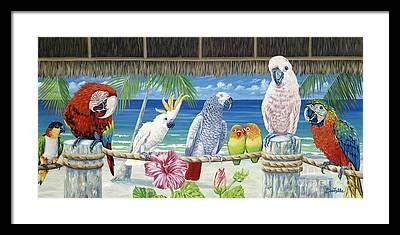 Cockatoo Framed Prints