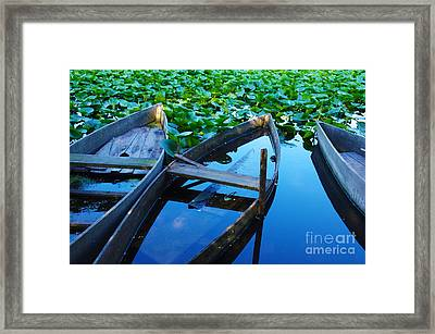 Pateira Boats Framed Print by Carlos Caetano