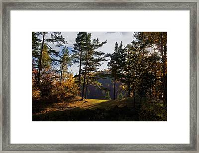Path In Autumn Light Framed Print