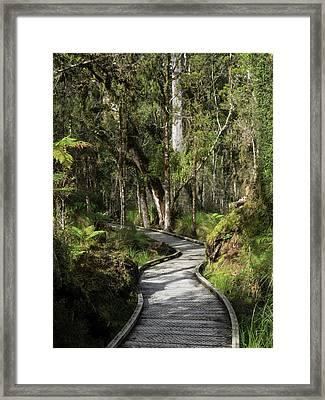 Path Passing Through Forest, Te Framed Print by Panoramic Images