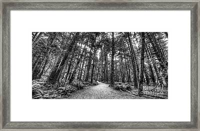 Path To Sol Duc Falls Framed Print
