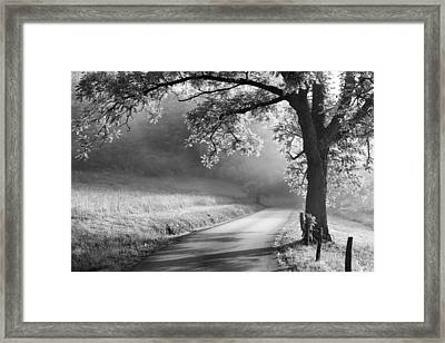 Path To The Woods Framed Print