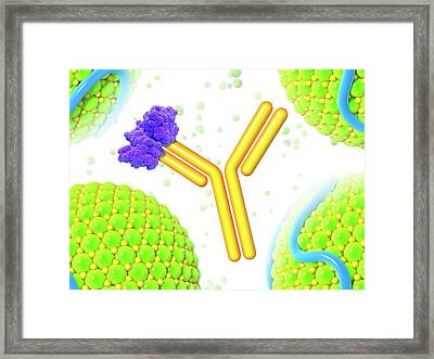 Pcsk9 And Inhibitor Framed Print